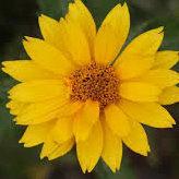 Flowertheflower