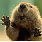 Beaver Boy
