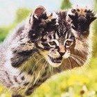 Chaotic_Kitten