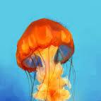 JellyfishWishes