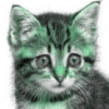 Green Kitten