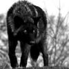 VZwolf's Photo