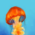 JellyfishWishes