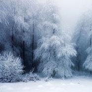 Schnee.