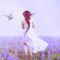 LavenderBliss