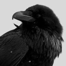 Amethyst Raven