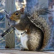 Squirrel Combat