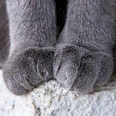 Catpaws