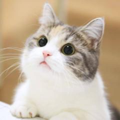 cat_lady