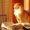 Bookishcat