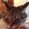 KittenPuff