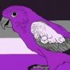 (A)rrogant Avian